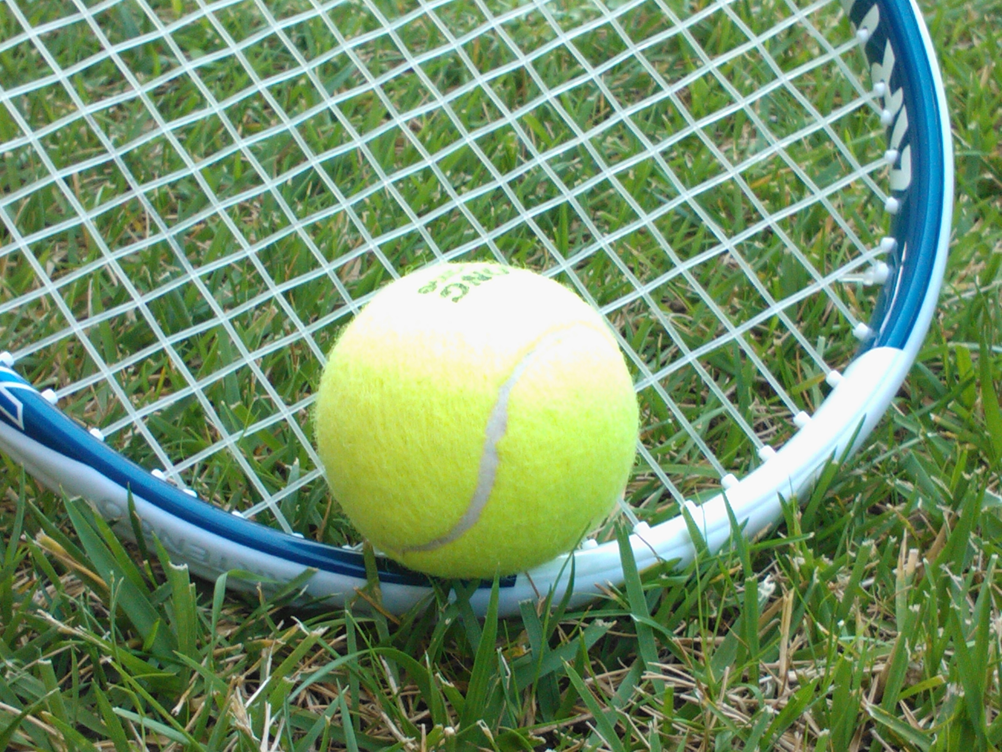 Tennis Halle Live